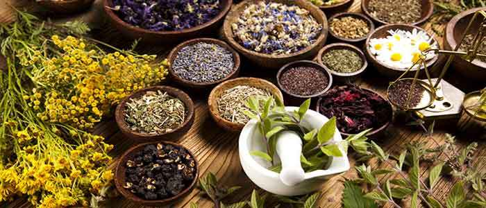 Natural Herbs for Humans